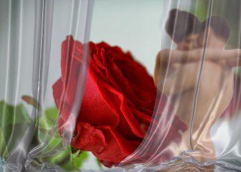 sa mentii erectia mai mult timp - sfatulparintilor.ro - pixabay_com - rose-2717785_1920