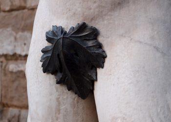 ce spune erectia despre sanatatea ta - sfatulaprintilor.ro - pixabay_com - fig-leaf-1657854_1920