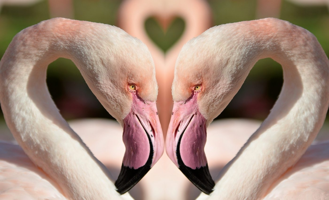 horoscop dragoste saptamanal - sfatulparintilor.ro - pixabay_com - birds-1357664_1920
