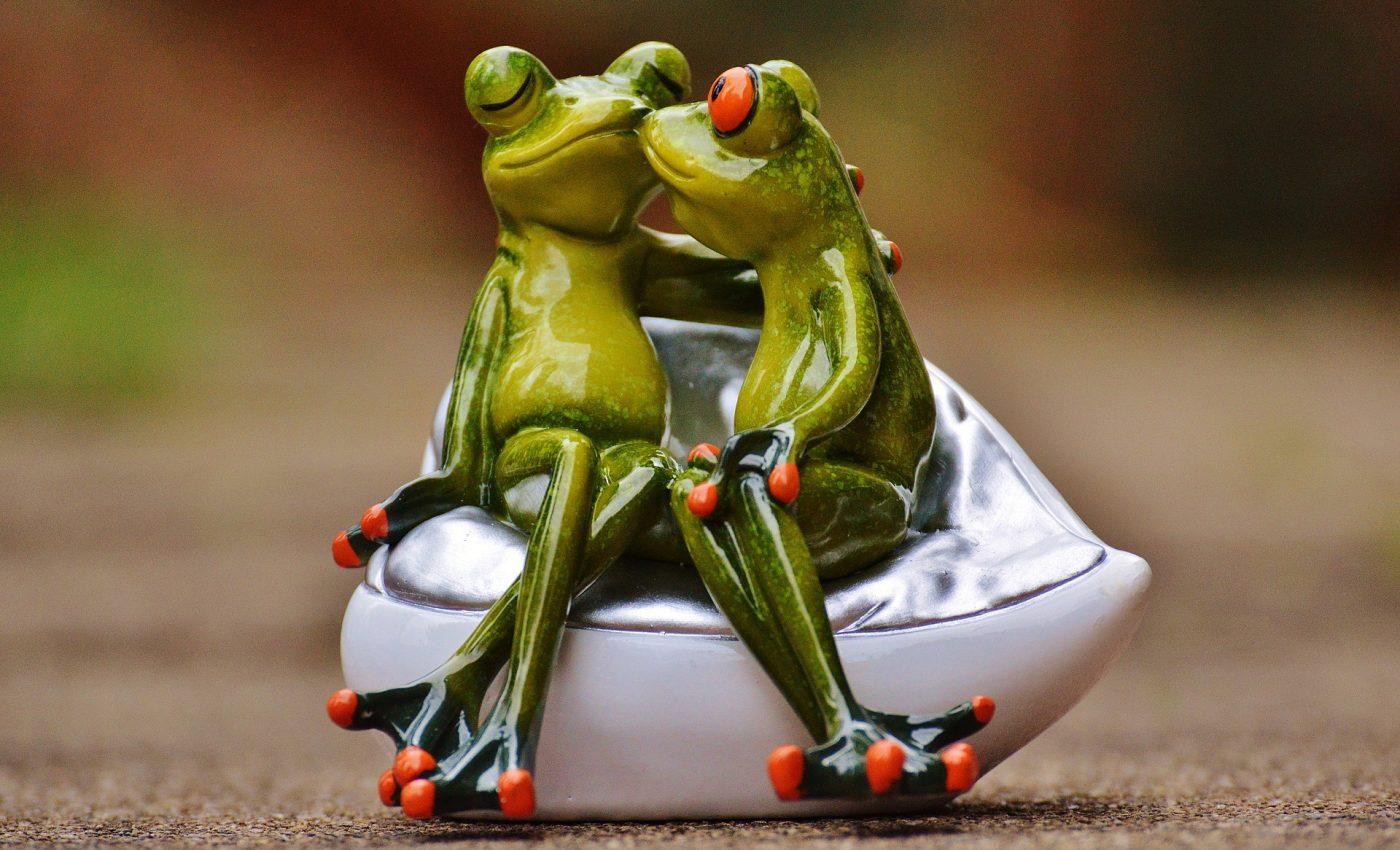 Cele mai bune combinatii de zodii - SFATULPARINTILOR.RO - PIXABAY_COM - frogs-1234585_1920