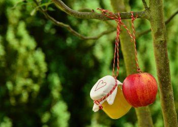 Compot de mere - sfatulparintilor.ro - pixabay_com - apple-tree-1574326_1920