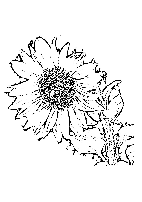 Sfatulparintilorro Planse De Colorat Floarea Soarelui