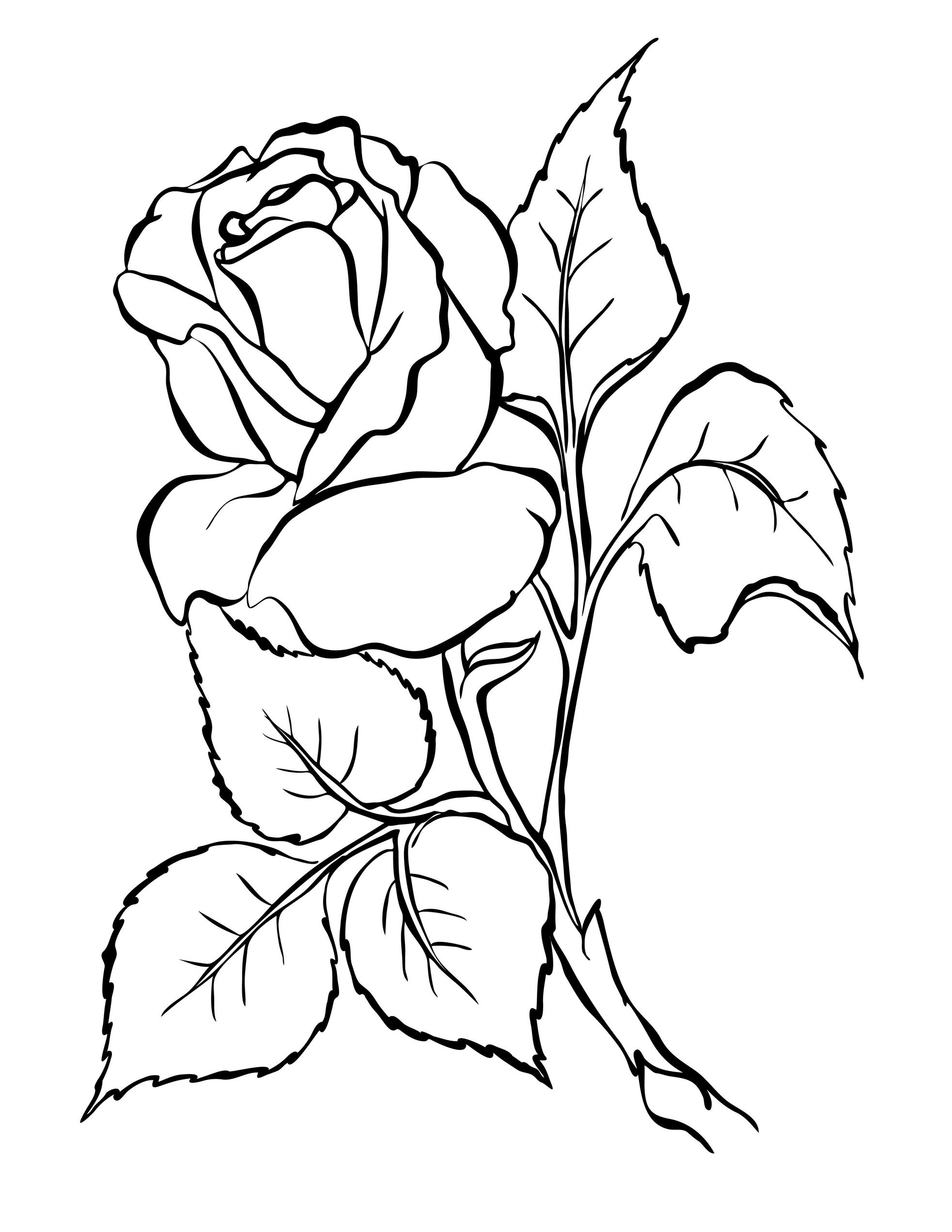 Colorat Pentru Copii Cu Trandafiri Imagini Cu Trandafiri Pentru