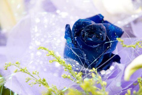sfatulparintilor.ro - Emotional: Trandafirul albastru