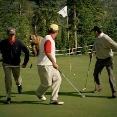 sfatulparintilor.ro - via-internet - grizzly - golf