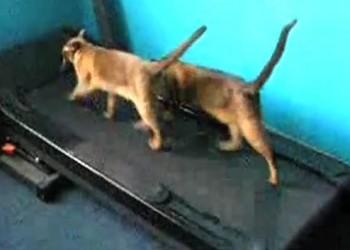sfatulparintilor.ro - pisici haioase - video