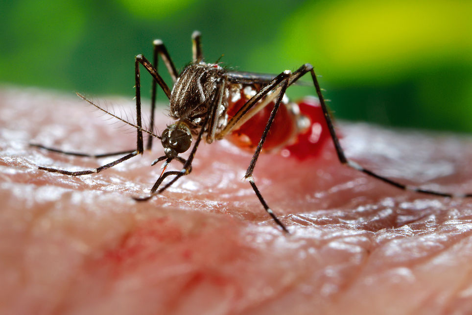 sfatulparintilor.ro - Atentie la insecte