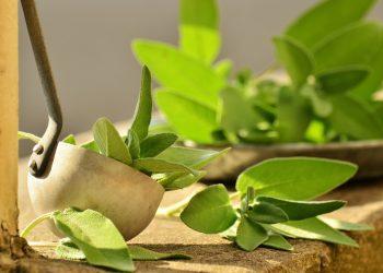 Ceai verde - sfatulparintilor.ro - pixabay_com - sage-1544883_1920