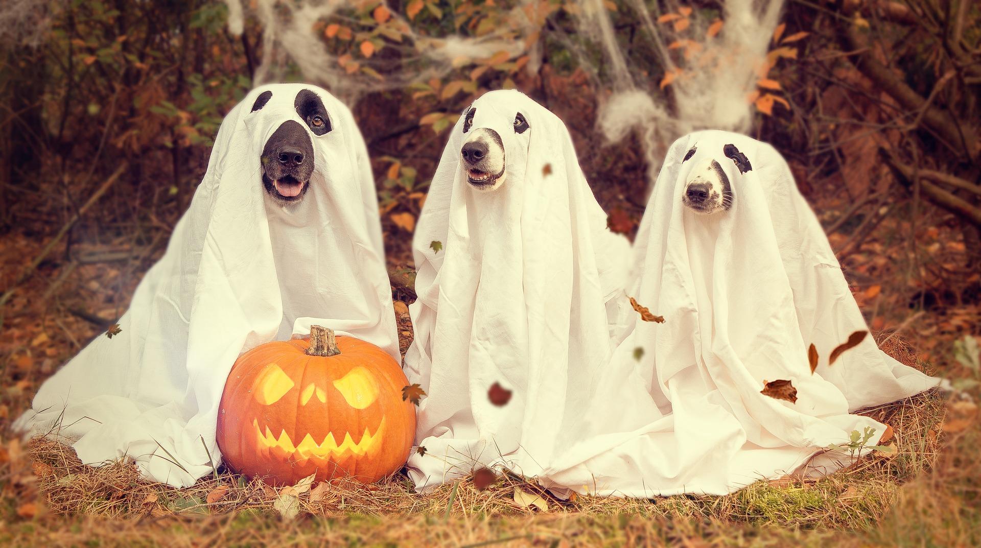 halloween-- sfatulparintilor.ro - pixabay-com - 2870607_1920
