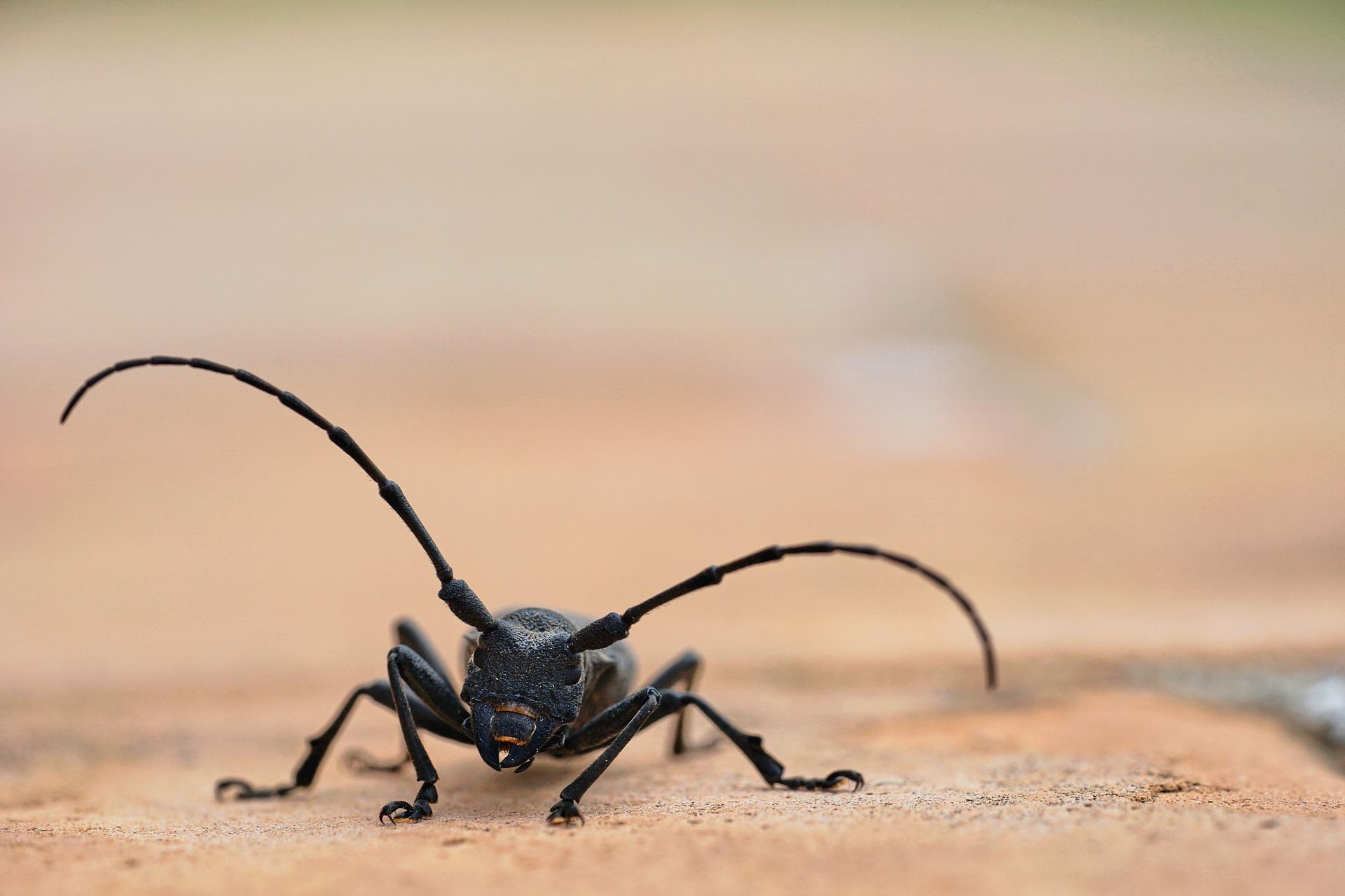 Cum sa scapi de insecte