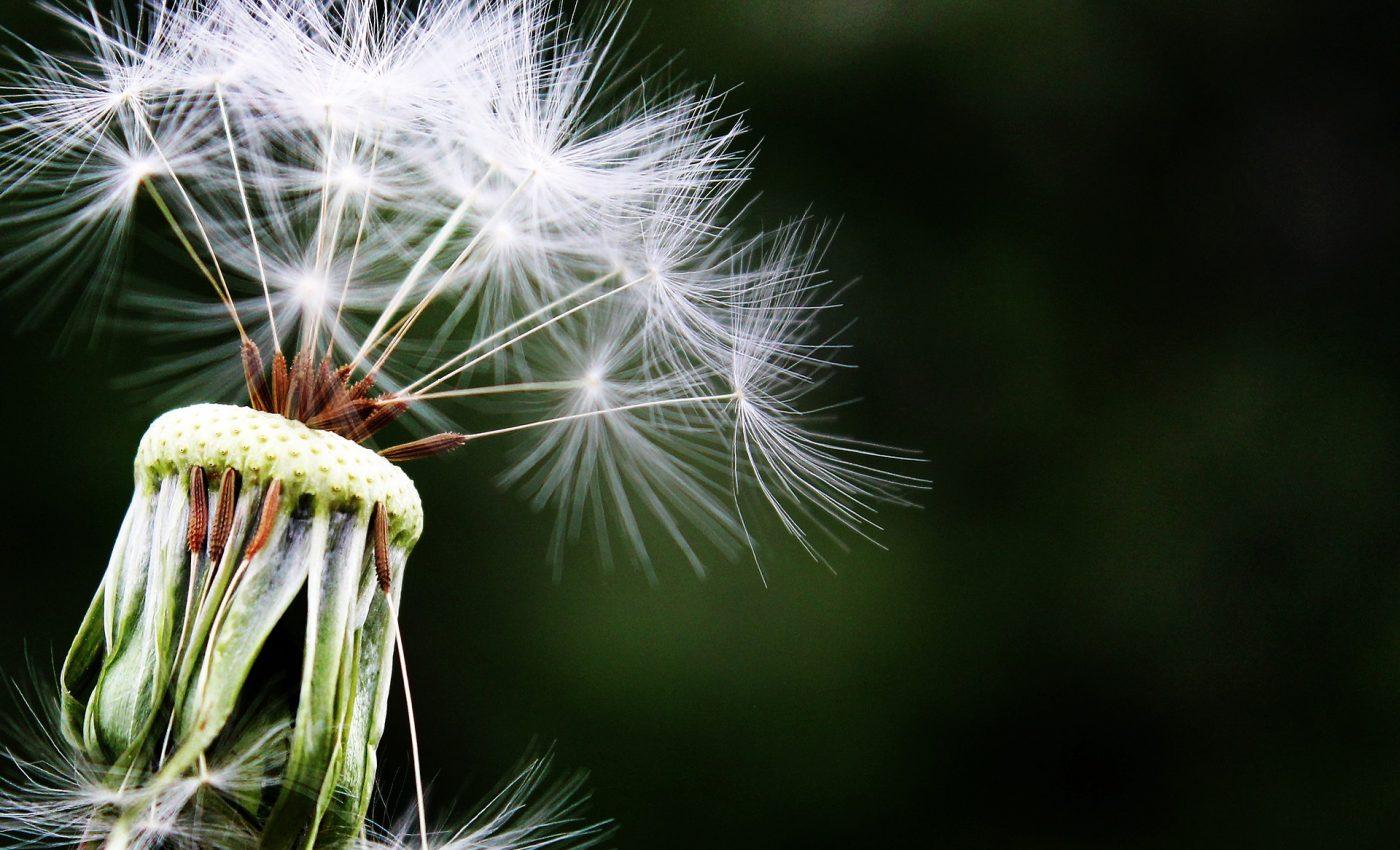 surse alergii