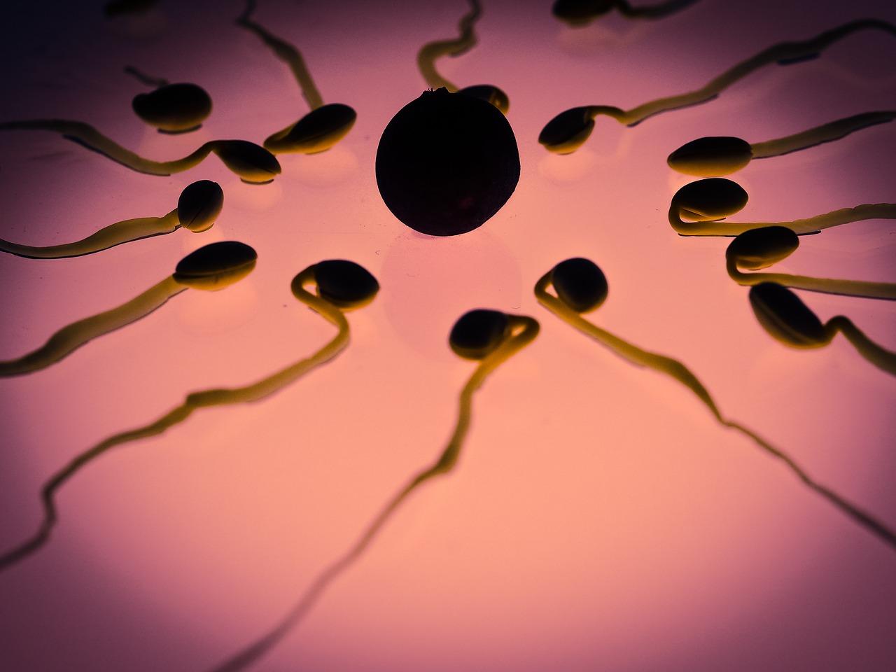 femeia la ovulatie - sfatulparintilor.ro - pixabay_com