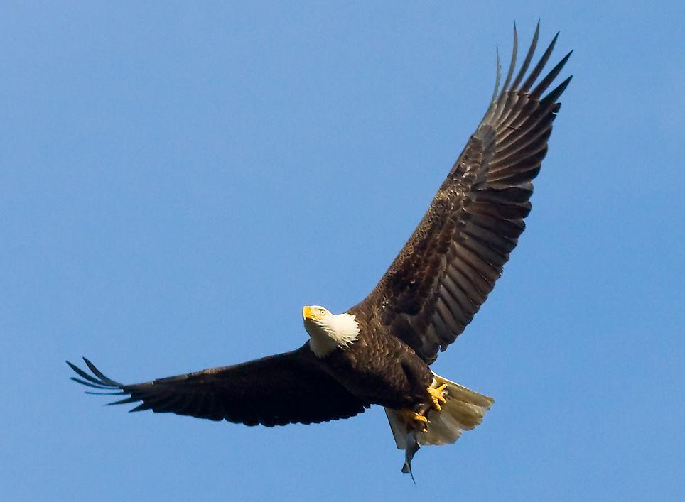 sfatulparintilor.ro - vultur - acvila - freestockphotos.biz
