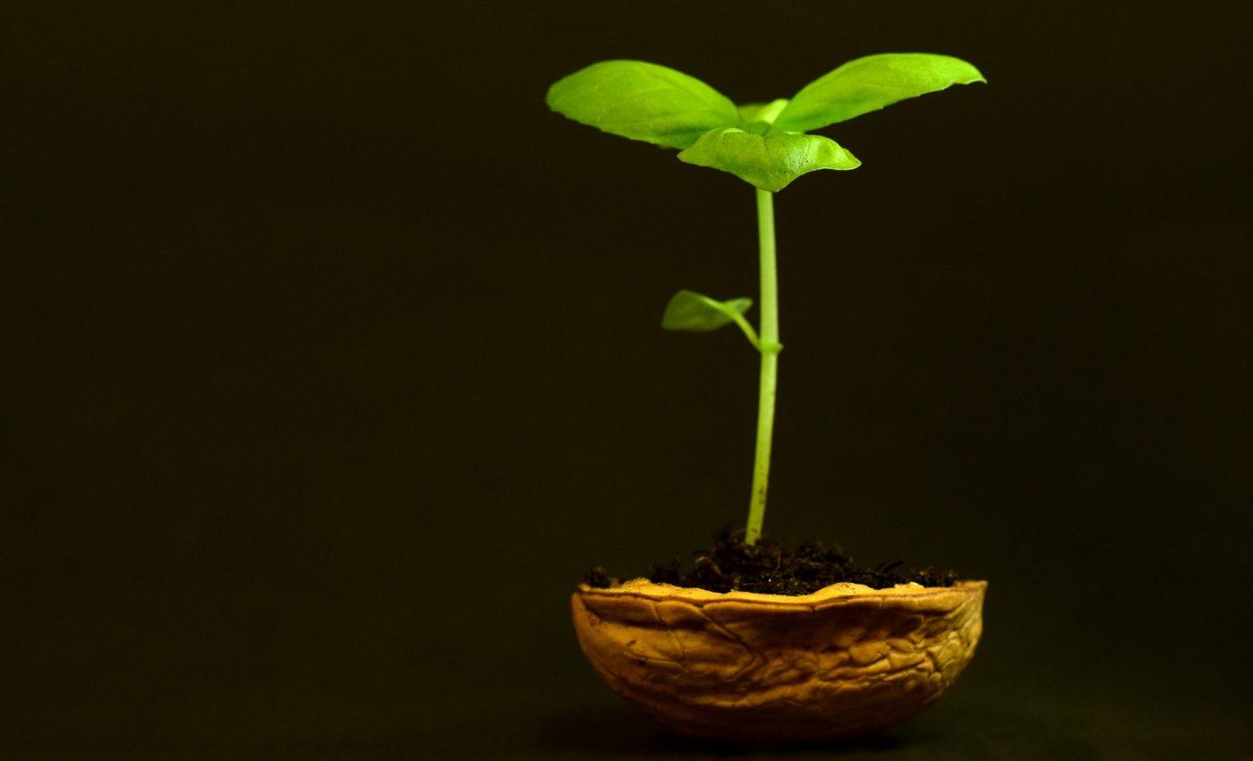 saptamana 1 de sarcina - sfatulparintilor.ro - pixabay_com - plant-3117525_1920
