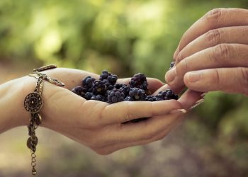 Alimente pentru creier - sfatulparintilor.ro - pixabay_com - hand-3239363_1920