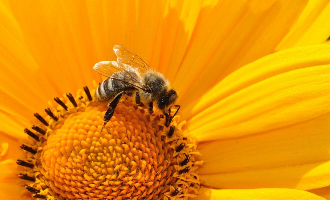 Aliment miraculos - sfatulparintilor.ro - pixabay_com - bee-170551_1920