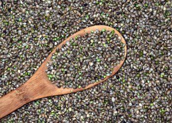 Slăbești mâncând semințe de cânepă