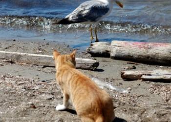 pisica portocalie si pescarusul - fotothing_com