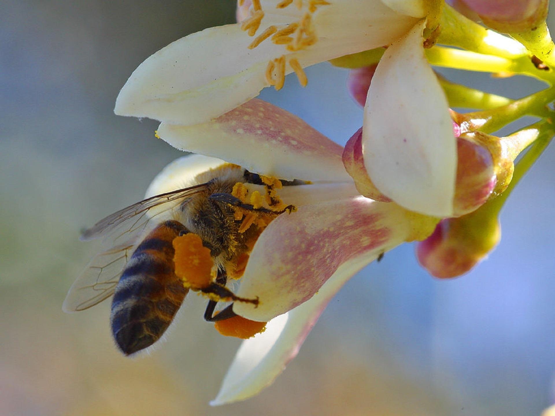 albine laptisor - sfatulparintilor.ro - pixabay_com