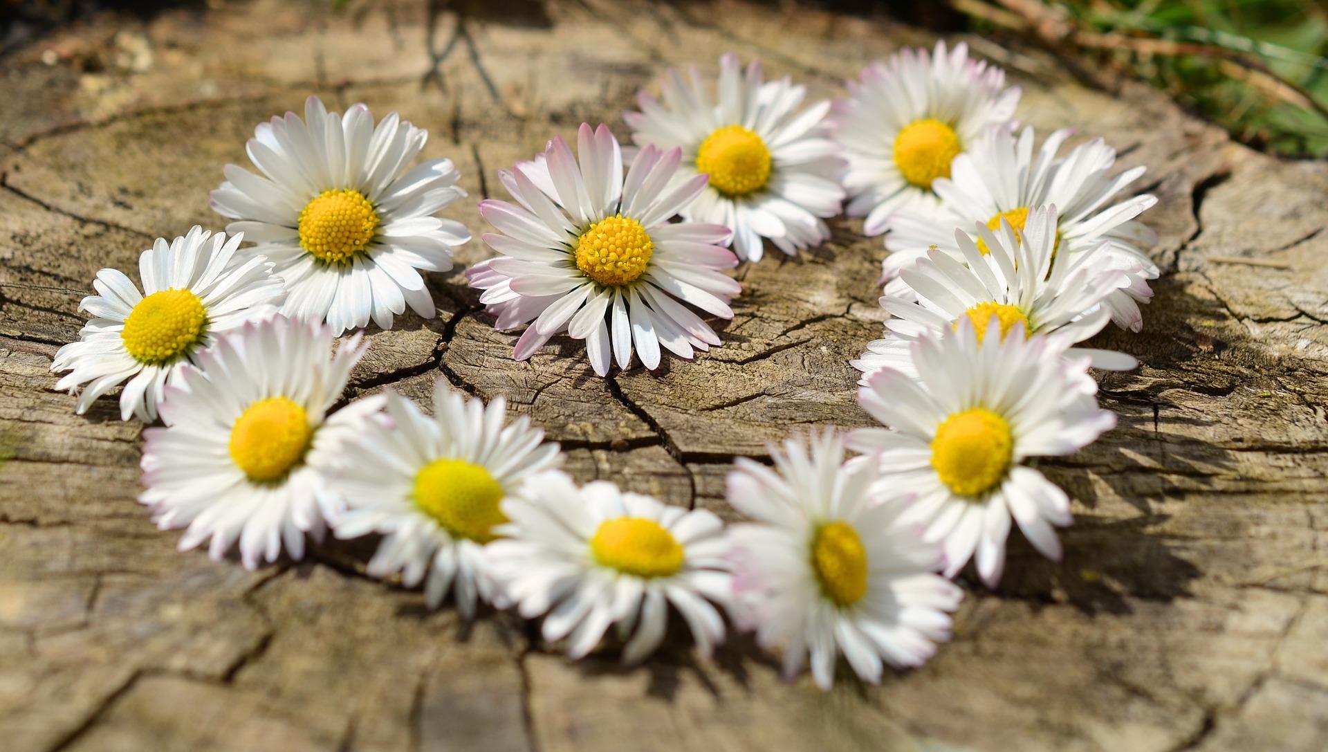 dragoste iubire - sfatulparintilor.ro - pixabay_com
