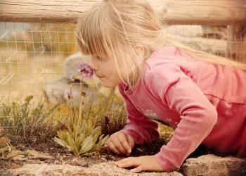 mirosuri secrete ale starii de bine - sfatulparintilor.ro - pixabay-com - child-645434_1920