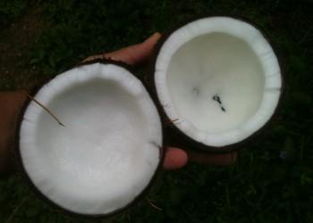 nuca de cocos - sfatulparintilor.ro - pixabay_com