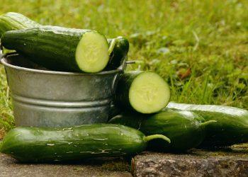 utilizari castraveti - sfatulparintilor.ro - pixabay_com- cucumbers-1588945_1920