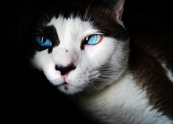 pisica - sfatulparintilor.ro - pixabay_com