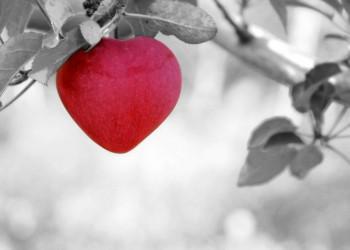 inima - sfatulparintilor.ro - pixabay_com