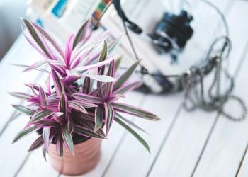 plante apartament - sfatulparintilor.ro - pixabay_com