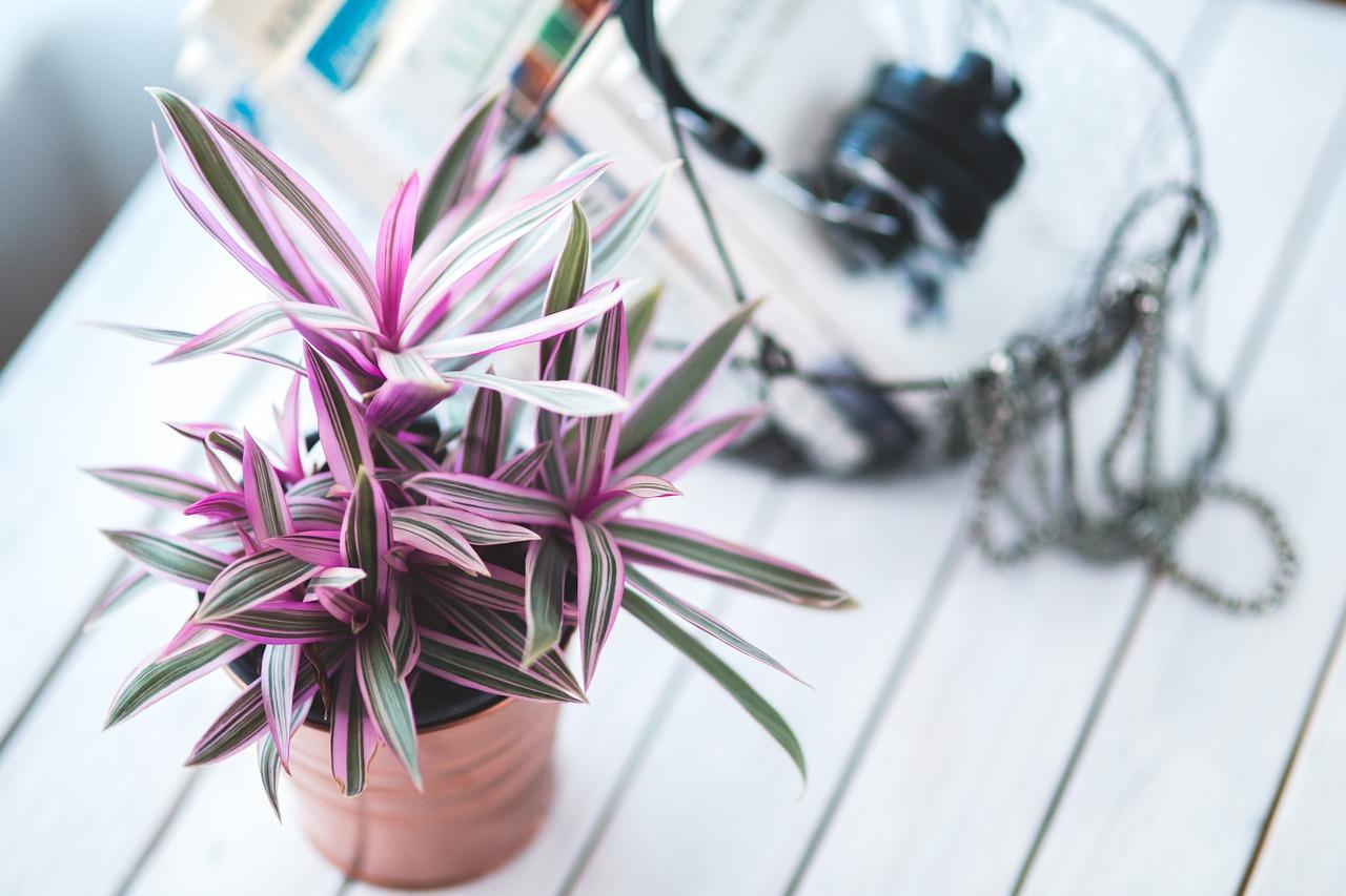 Cele mai bune plante pentru fiecare camera