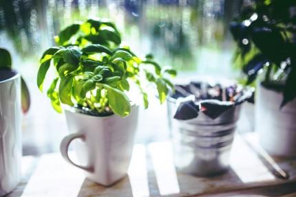 plante aromatice - sfatulparintilor.ro - pixabay_com