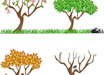 copac - anotimpuri - sfatulparintilor.ro - pixabay_com