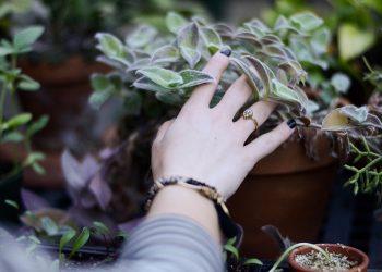 plante - sfatulparintilor.ro -pexels-photo-106171