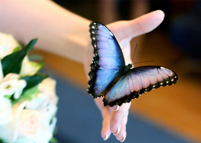 Expozitie de fluturi vii