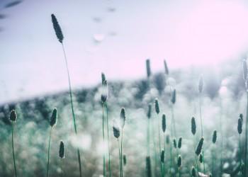 alergie - sfatulparintilor.ro - pixabay_com