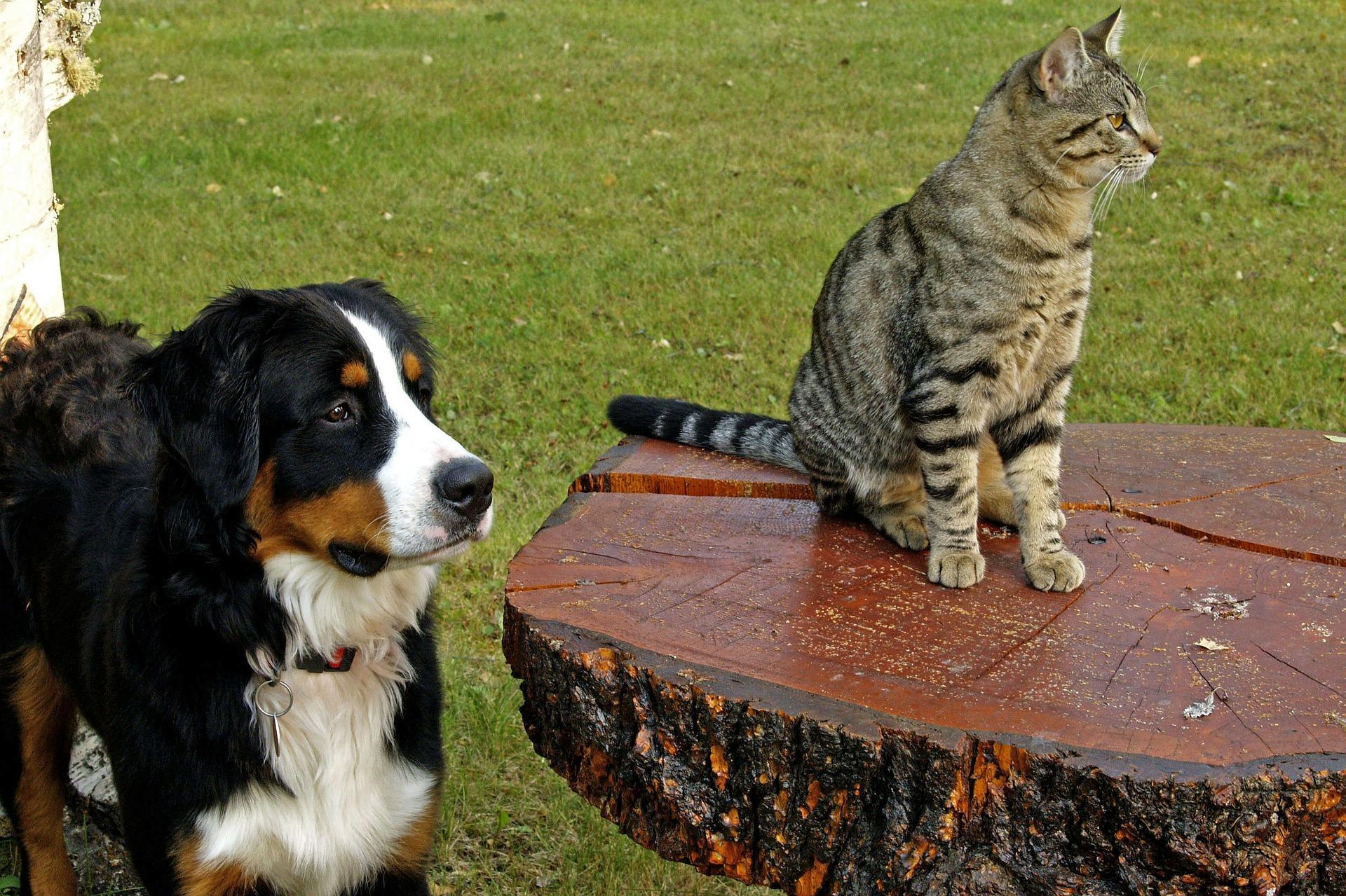 animale de companie - caine - pisica - sfatulparintilor.ro - pixabay_com