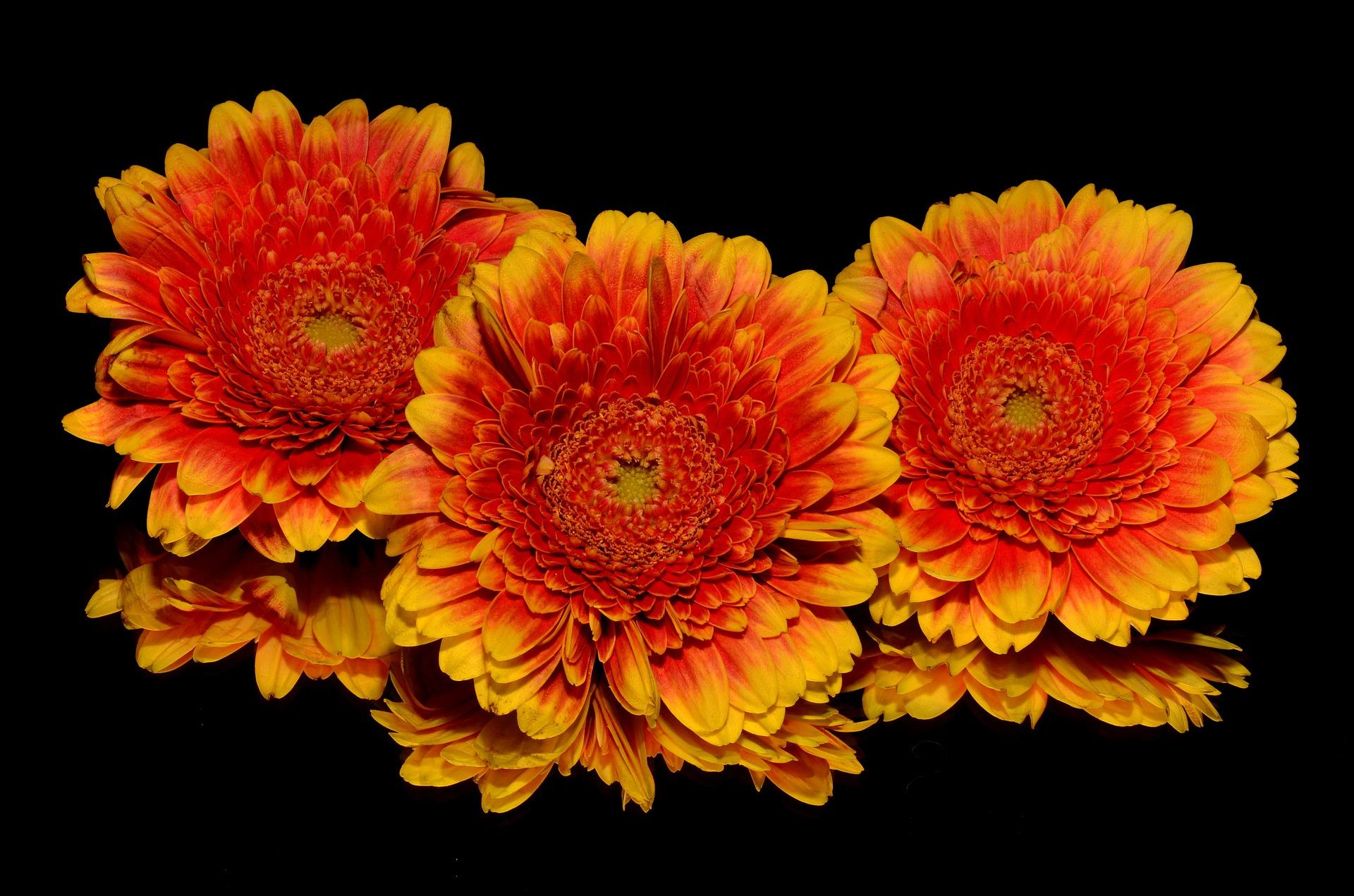 flori - sfatulparintilor.ro - pixabay_com