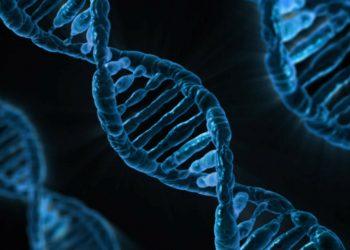 adn - celule - sfatulparintilor.ro - pixabay_com