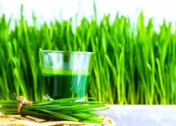 """Datorită celor peste 100 de compuşi ortomoleculari nutriţional-activi existenţi în acest ingredient-minune, este considerat """"alimentul perfect din punct de vedere micronutriţional"""" și unul dintre cele mai sigure tratamente naturiste."""