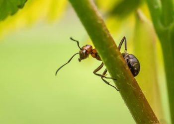 ca sa scapi de furnici - sfatulparintilor.ro - pixabay_com - nature-697126