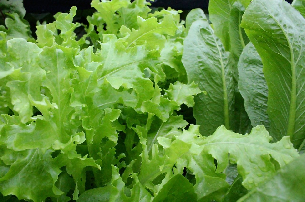 Deficit de magneziu - salata - sfatulparintilor.ro _pixabay_com