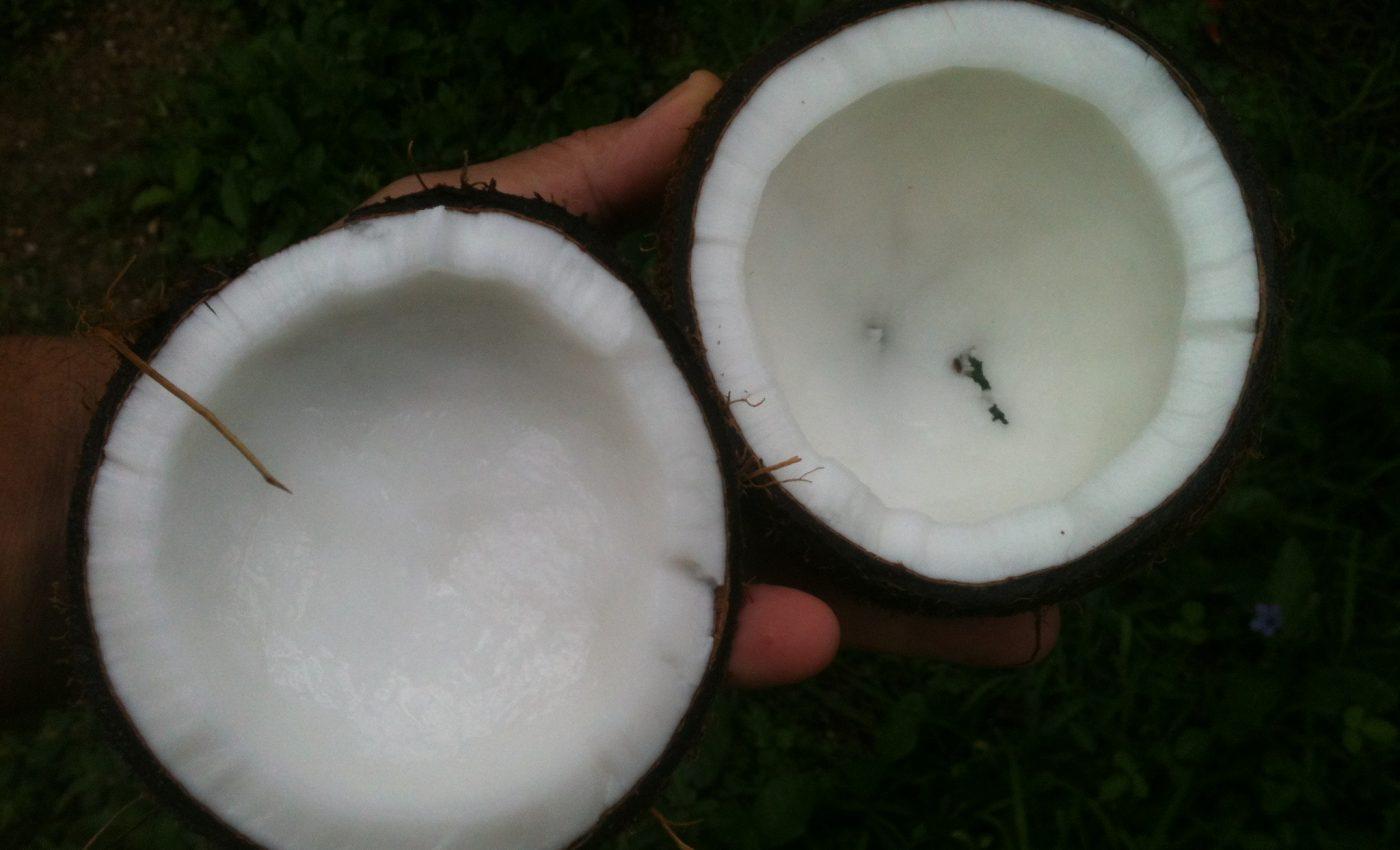 ulei nuca de cocos - pixabay_com