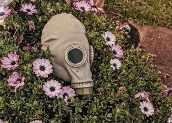 flatulenta - gaze - sfatulparintilor.ro - pixabay_com