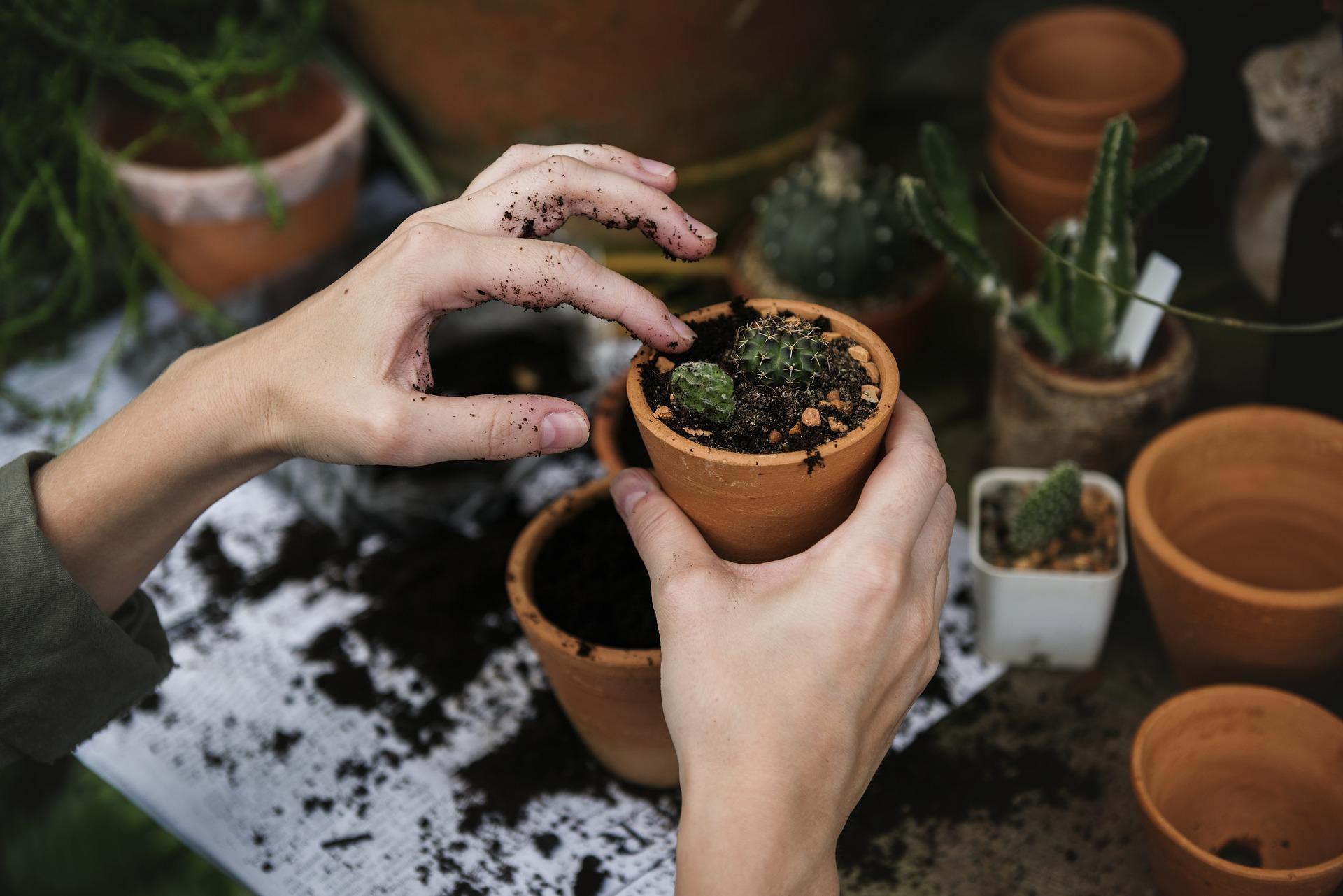 Plante de apartament - sfatulparinitlor.ro - pixabay_com - ecology-2985781_1920