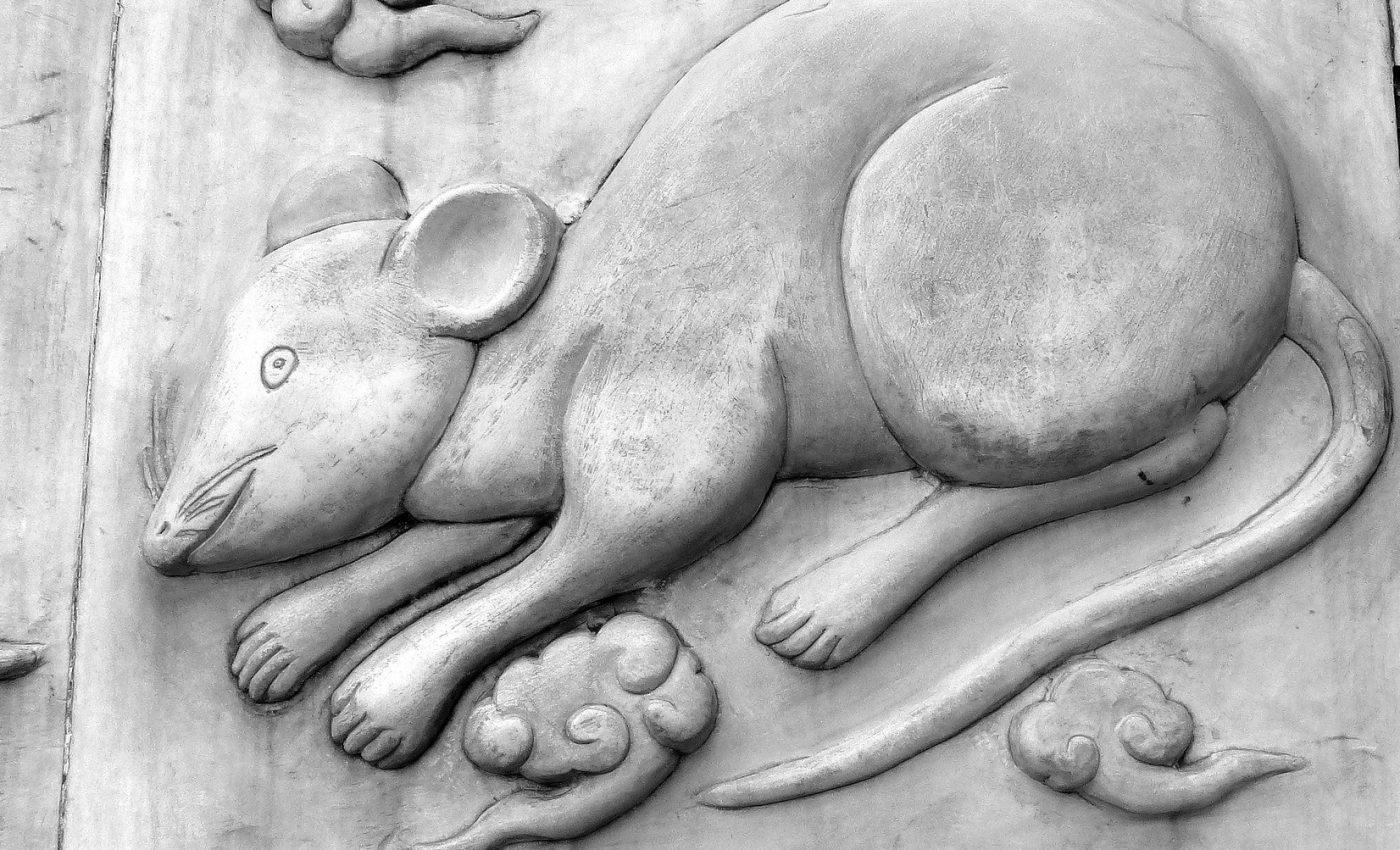 anul sobolanului - sfatulparintilor.ro - pixabay_com - rat-279633_1920