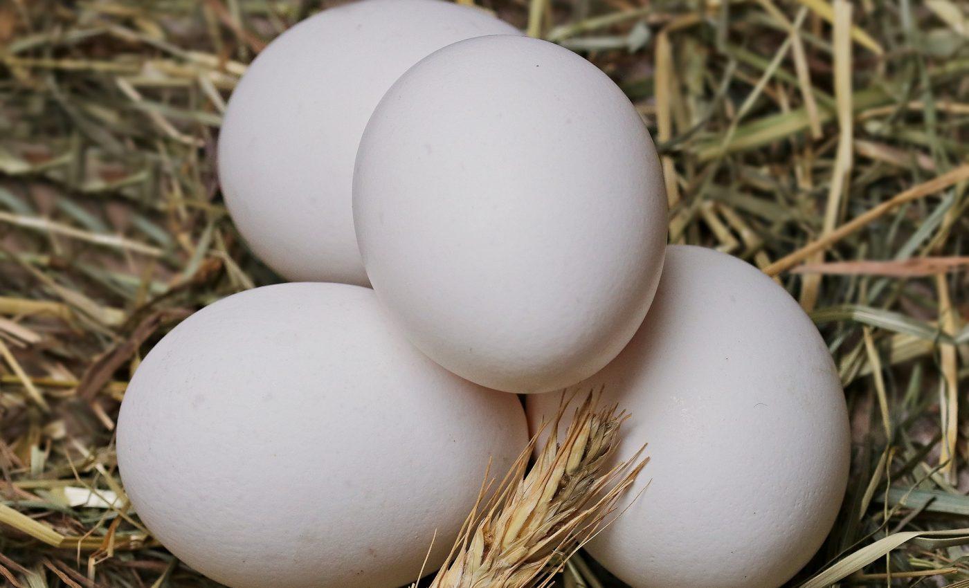 lucruri nestiute despre oua - sfatulparintilor.ro - pixabay_com - egg-2048476_1920