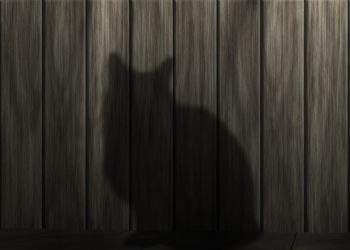 pisica - sfatulparintilor.ro - pixabay_com - cat-233367