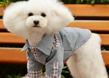 """Sintagma """"Bravo, ai stil!"""" este tot mai întâlnită atunci când vine vorba de animale de companie."""