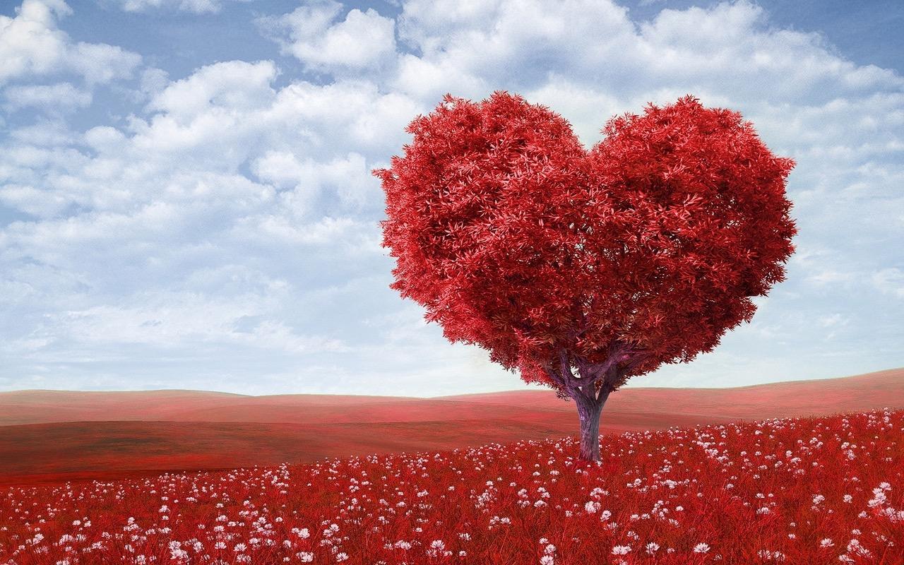 iubire - dragoste - sfatulparintilor.ro - pexels-photo-207962